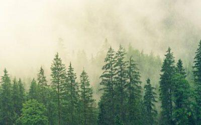 S rýmou posílám spát děti do lesa /praktický návod/